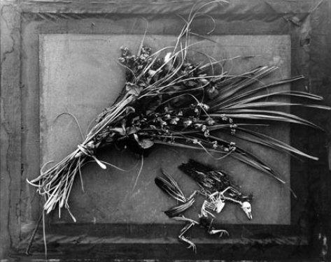 Photographies au dos d'un cadre ou dans une caisse, des natures mortes aux tirages magnifiques.