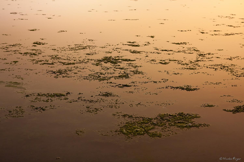 Photographie artistique, travail sur l'eau