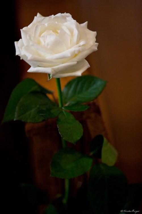 Photographie d'une fleur