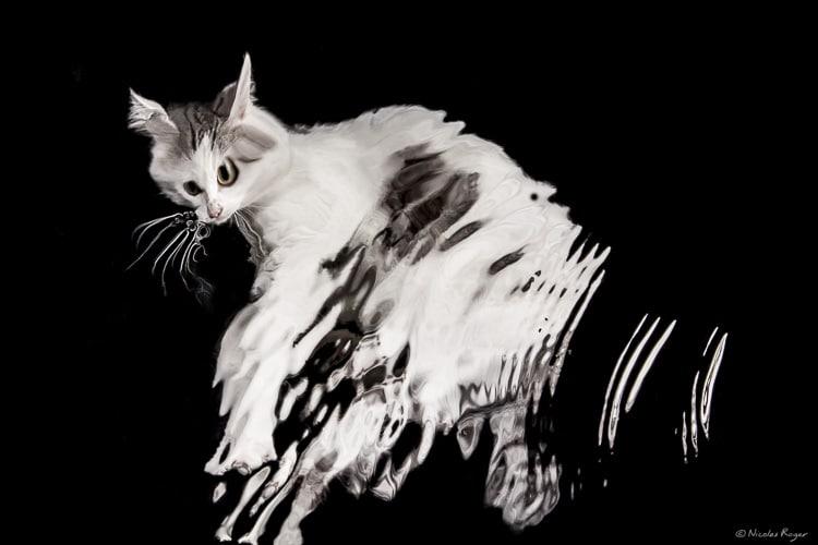 Chat déformé par l'eau